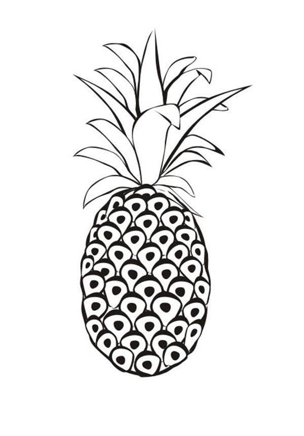 Red Spanish Pineapple From Venezuela