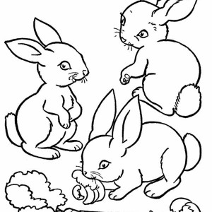 Three Cute Bunnies Eating The Carrot Coloring Page