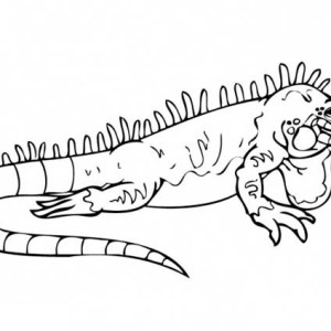 Charming Big Iguana Coloring Page
