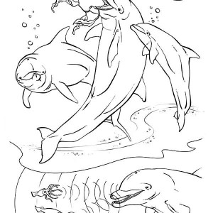Dolphins Hunt Squids Using Sonar And They Like Vegies Too Coloring Page