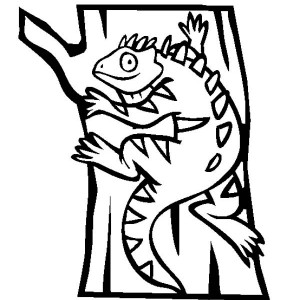 Iguana Climbing A Tree Coloring Page For Kids