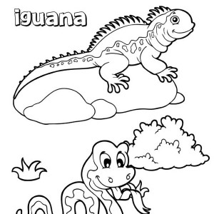 Iguana Coloring Book Coloring Page