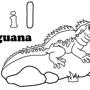 Iguana Sunbathing On A Rock Coloring Page
