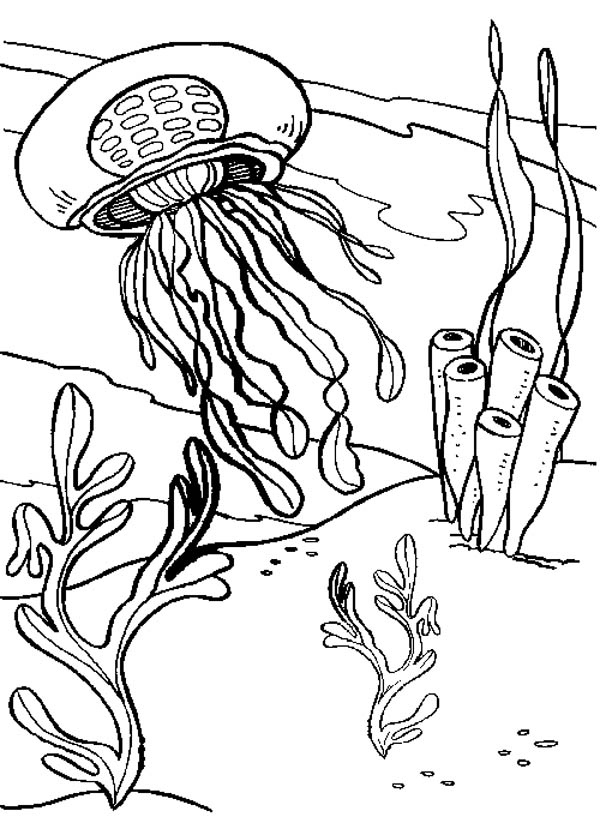 Jelly Fish And Seaweed Coloring Page Download Print