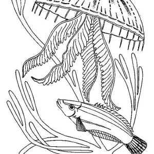 Jellyfish Attack A Fish Coloring Page For Kids