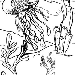 Jellyfish Polyp And Adult Jellyfish Coloring Page
