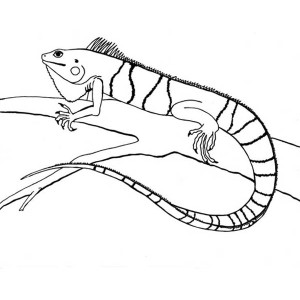 Striped Iguana On A Tree Coloring Page