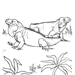Two Giant Iguana Coloring Page