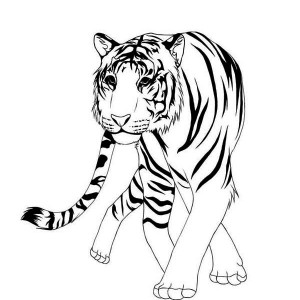 A Classic Chinese Illustration Of Asian Tiger Coloring Page