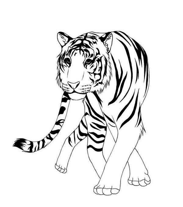 asia animal coloring pages | A Classic Chinese Illustration Of Asian Tiger Coloring ...
