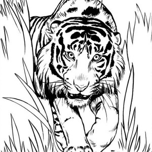A FearsomeTiger Sneaking For An Ambush Coloring Page