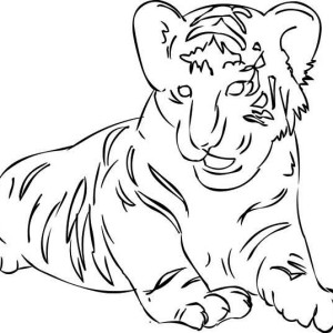 A Figure Of Siberian Tiger Cub Coloring Page
