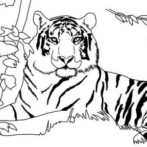 A Lazy Tiger After Its Meal Coloring Page