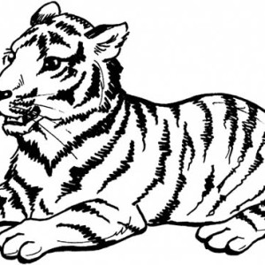 A Sumatran Tiger On Its Sitting Posture Coloring Page