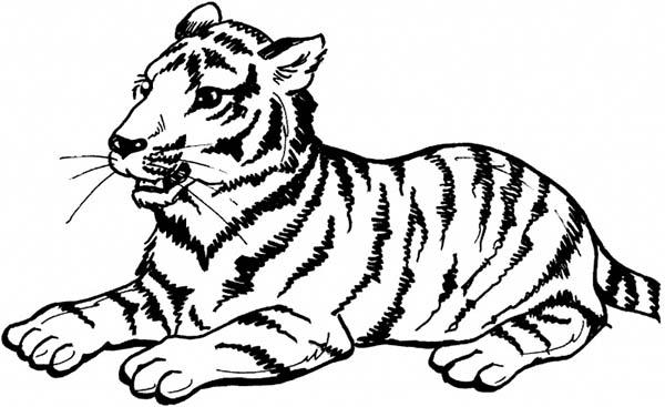 A Sumatran Tiger on Its Sitting Posture Coloring Page ...