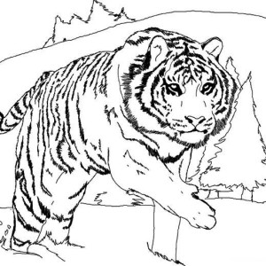 A Tiger Crawling From Its Nest Coloring Page
