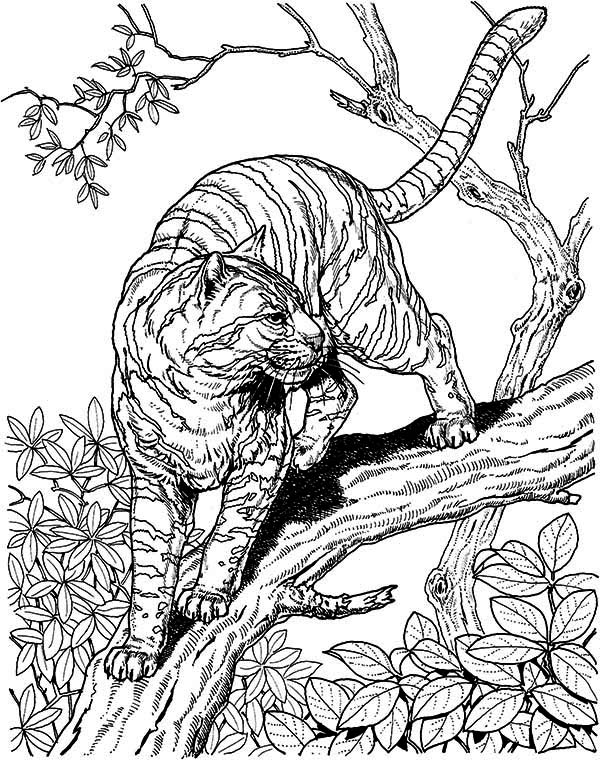 A Tiger Liked Wild Cat In The Wild Coloring Page