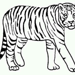 A Tiger Looking Over Its Territory Coloring Page