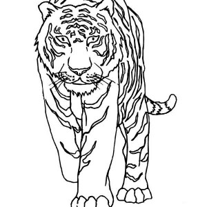 A Tiger Walking Very Cautiously Coloring Page