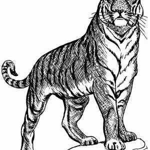 A Tiger On Guard Posture Coloring Page