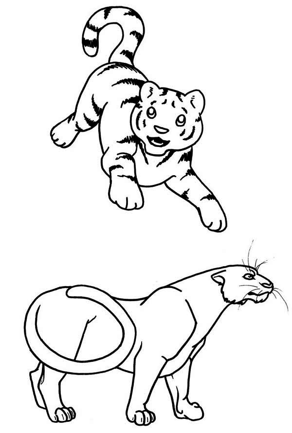 A Young Tiger Cub And The Adult Coloring Page - Download ...
