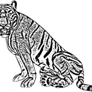 An Angry Face Of A Tiger Coloring Page