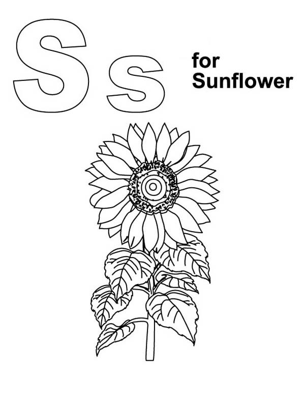 Awesome Sunflower Coloring Page Download Amp Print Online