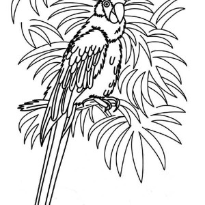 Beautiful Female Parrot Coloring Page