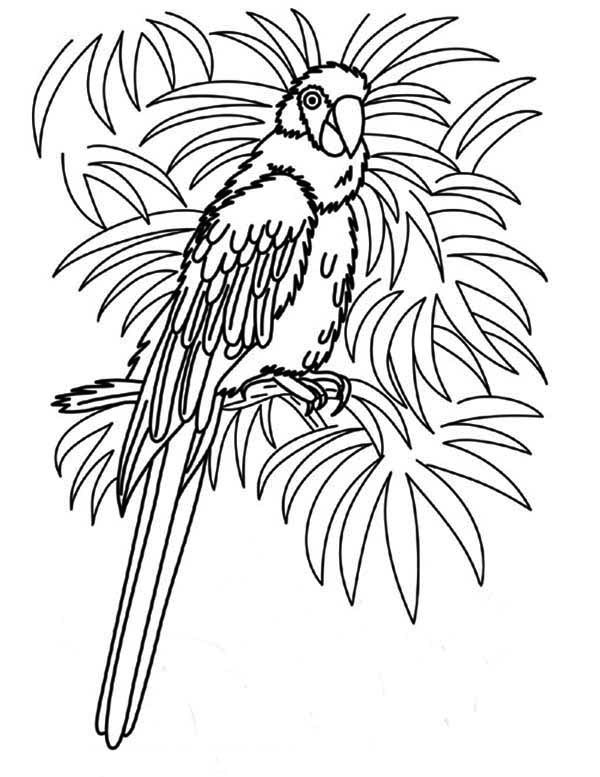 Beautiful Female Parrot Coloring Page - Download & Print ...