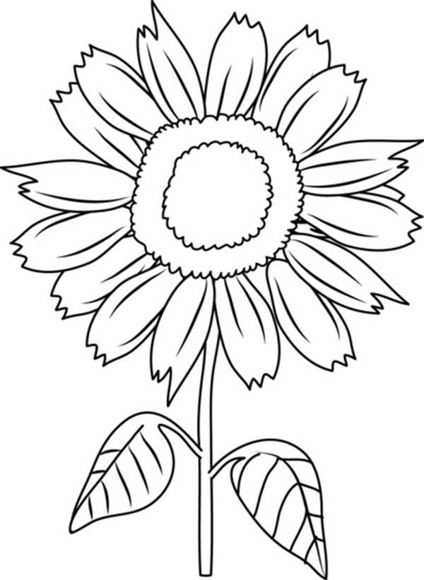 Beautiful sunflower coloring page download print for Sunflower coloring book pages
