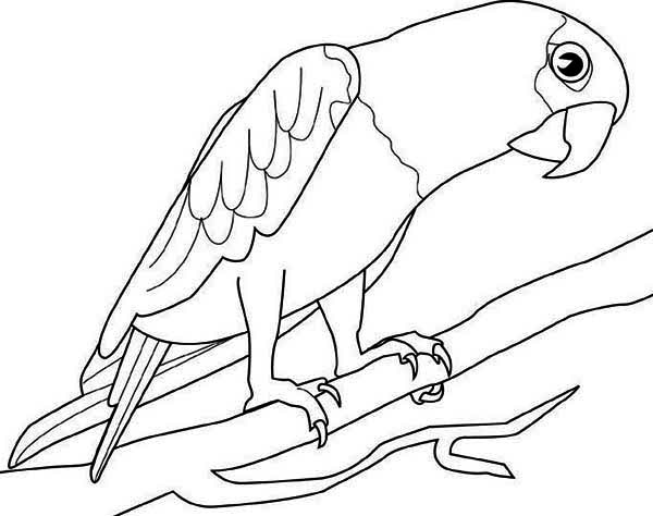 Big Parrot Coloring Page - Download & Print Online Coloring Pages ...