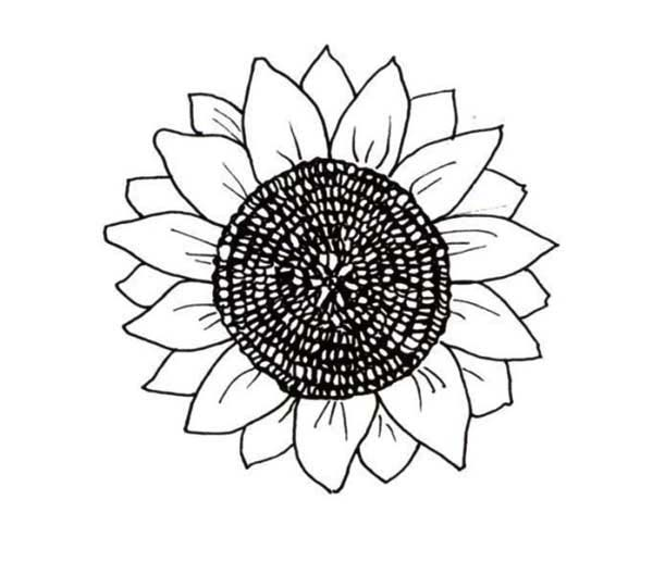Big Sunflower Coloring Page - Download & Print Online ...