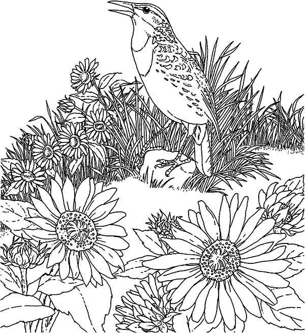 Bird And Sunflower Garden Coloring Page Download Amp Print