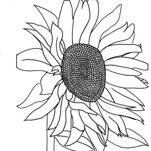 Fading Sunflower Coloring Page