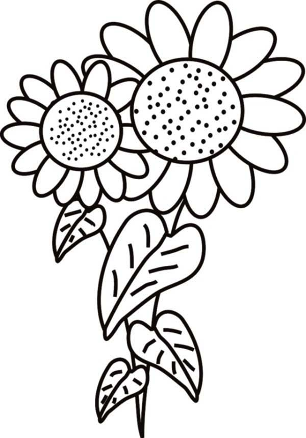 Fancy Sunflower Coloring Page
