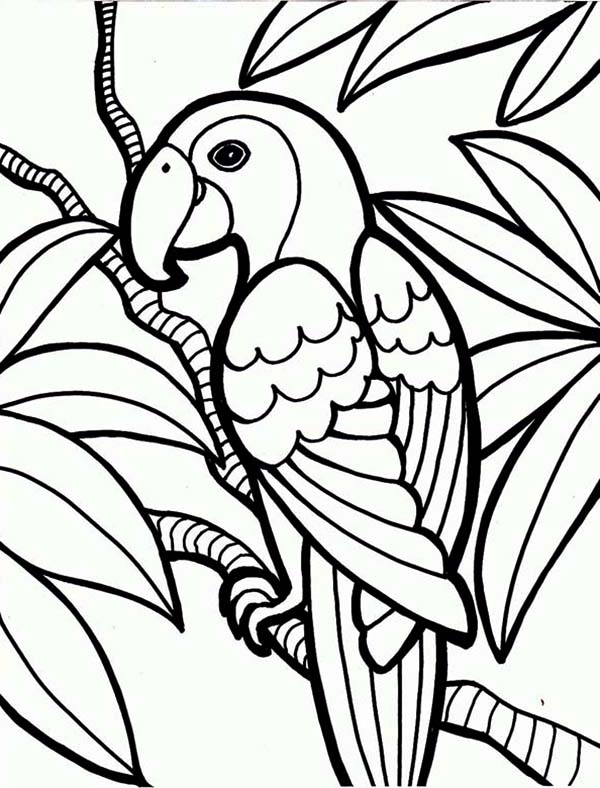 Jungle Parrot Coloring Page Download Print Online Pages Rhcolornimbus: Coloring Pages For Jungle At Baymontmadison.com