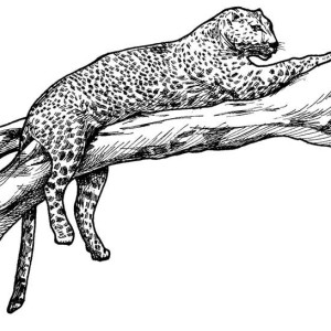 Leopard Tiger On A Tree Branch Coloring Page