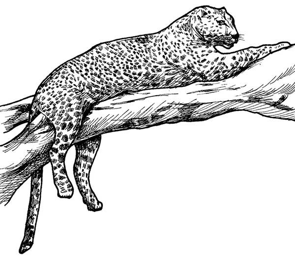 Leopard Tiger On A Tree Branch Coloring Page Download