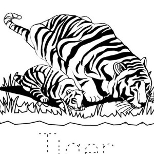 Lets Learn The Word Tiger Coloring Page