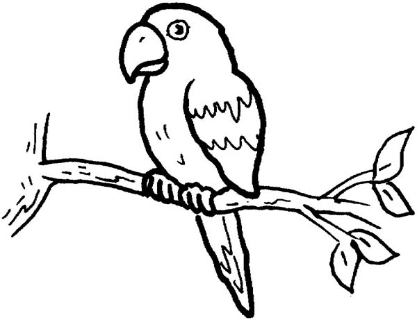 Little Parrot Coloring Page - Download & Print Online Coloring Pages ...