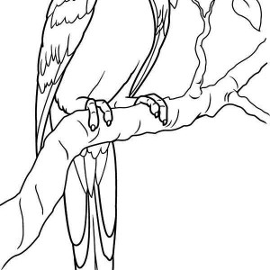 Lovely Parrot Coloring Page