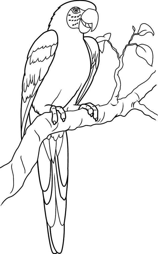 Lovely Parrot Coloring Page - Download & Print Online Coloring Pages ...