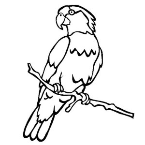 Male Parrot Coloring Page
