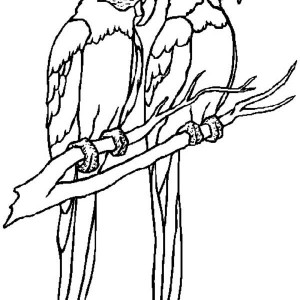 Parrot Couple Coloring Page