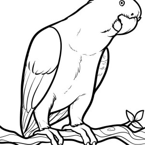 Parrot Looking For Food Coloring Page