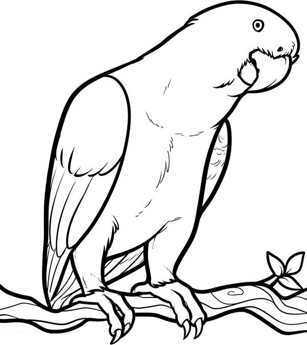 Parrot Looking for Food Coloring Page - Download & Print ...