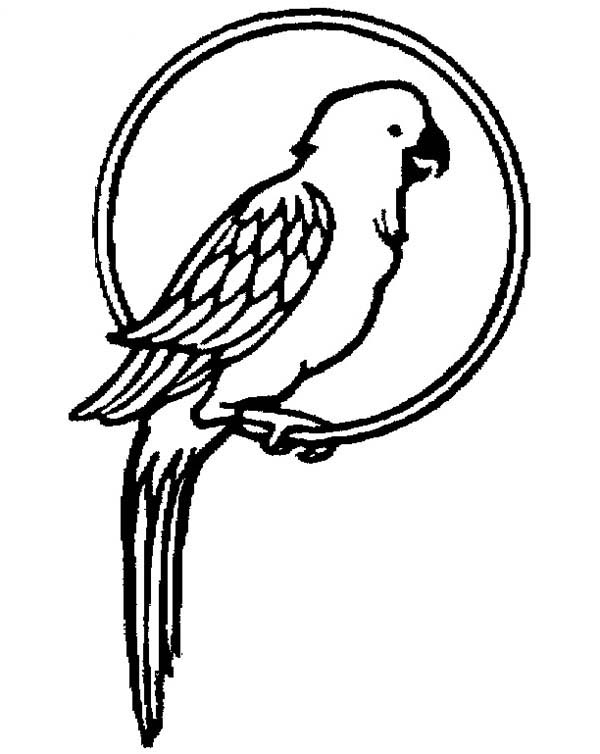 Parrot Pet Coloring Page - Download & Print Online ...