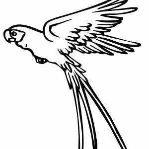 Parrot Is Flying Coloring Page