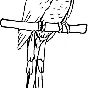 Pirate Parrot Coloring Page