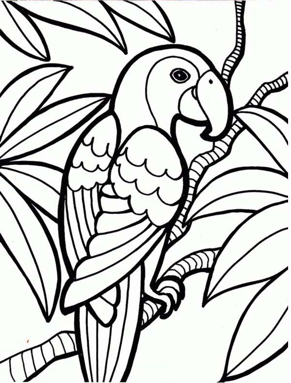 Rainforest Parrot Coloring Page - Download & Print Online Coloring ...